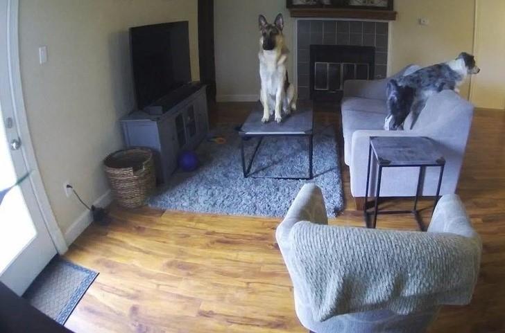 მაქვს კამერა რომლის დახმარებითაც შემიძლია ვუყურო რას აკეთებენ ჩემი ძაღლები