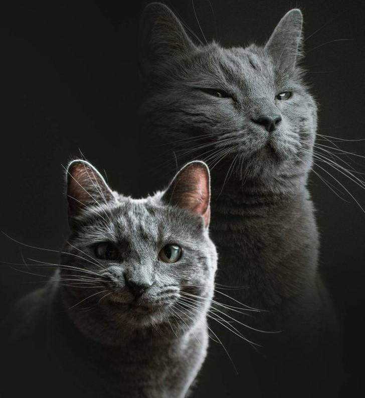 """დავიტოვე მეგობრის კატა და მოვუწყე მას ფოტოსესია"""""""