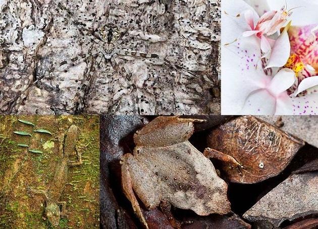 Photo of მიმიკრიის ოსტატი ცხოველები