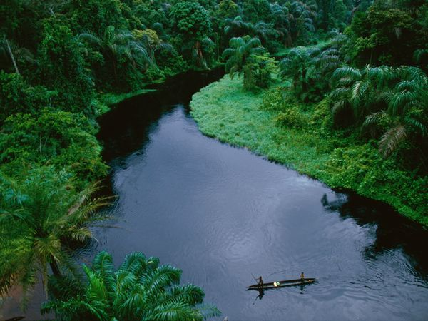 Photo of National Geographic: ტროპიკული ტყეების ფოტოგალერეა